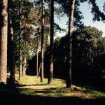Parco secolare